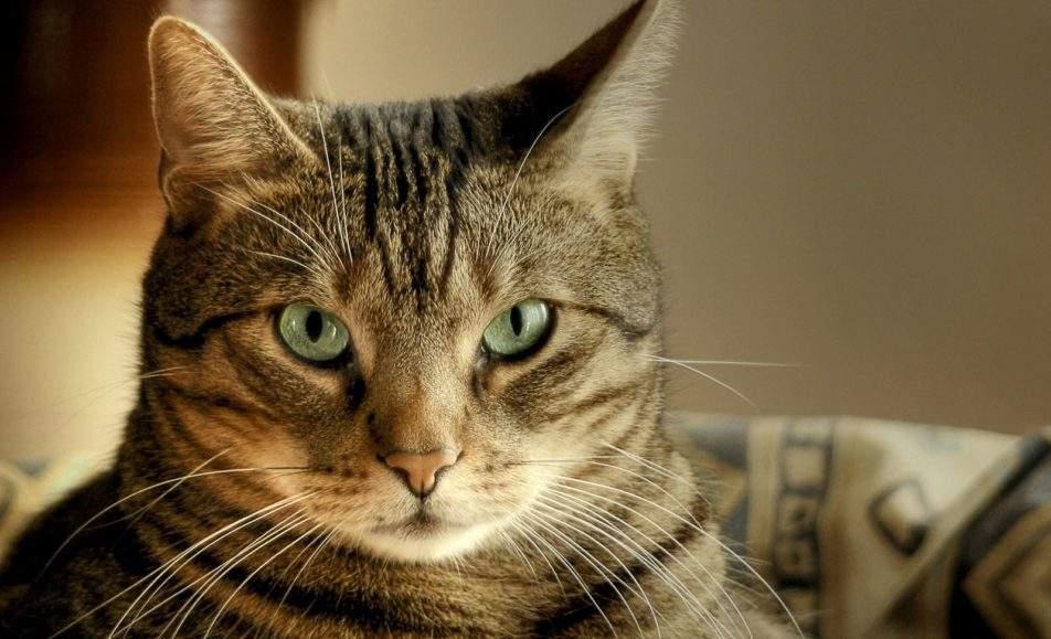 Всего понемножку о котах и о кошках