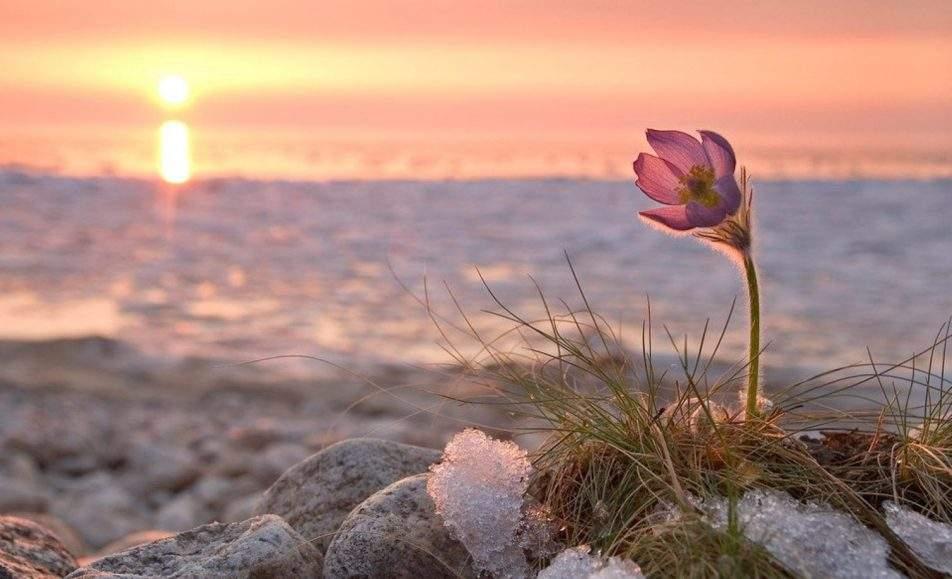 В них тепла, и любви, и весны торжество